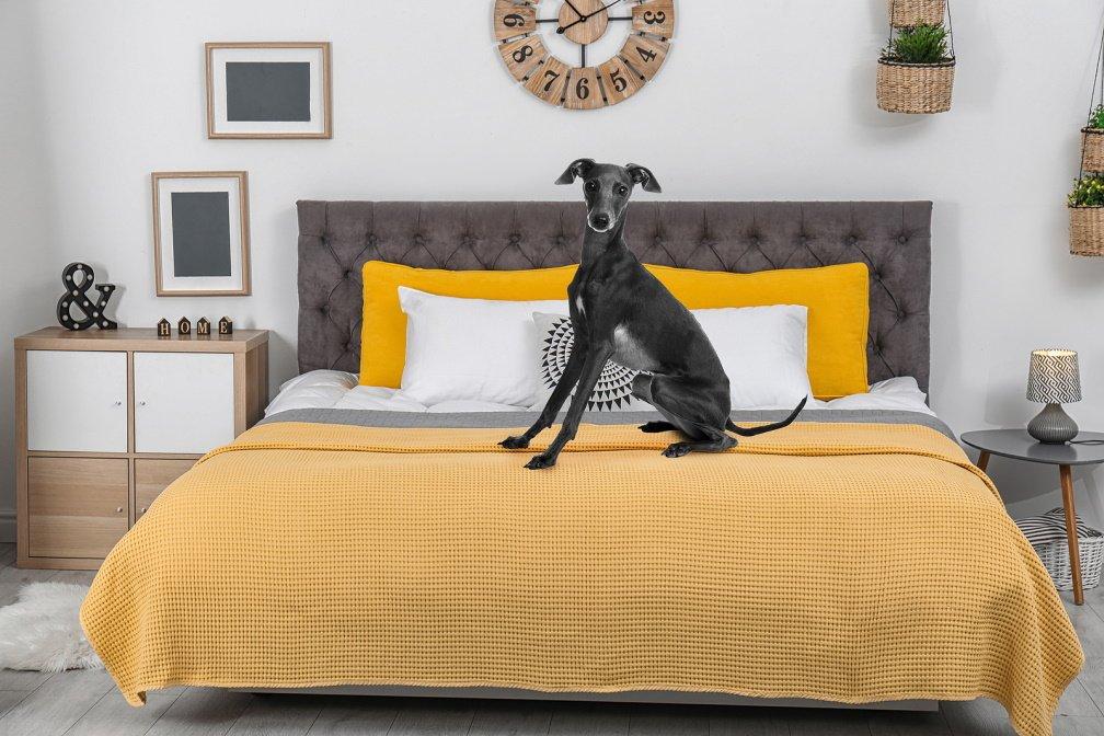 Een hond op het bed in de hotelkamers van hotel Breitner